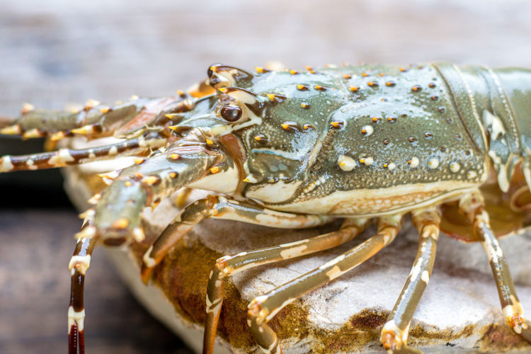 Close-up of crab on table