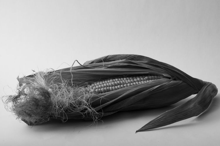 Direct shot of a piece of corn in the Ansell Adams black and white style. Close-up Copy Space Cut Out Food Food And Drink Freshness Healthy Eating High Angle View Indoors  No People Plant Part Rope Still Life Studio Shot Table Tied Up Vegetable Wellbeing White Background