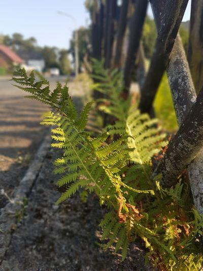 Tree Reptile Branch Moss Plant Bark Woodpecker