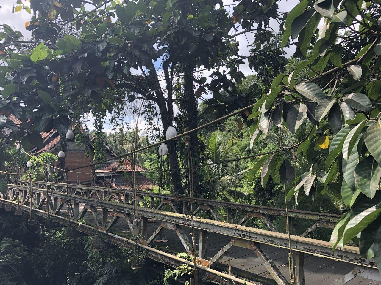 LOW ANGLE VIEW OF BRIDGE AMIDST PLANTS