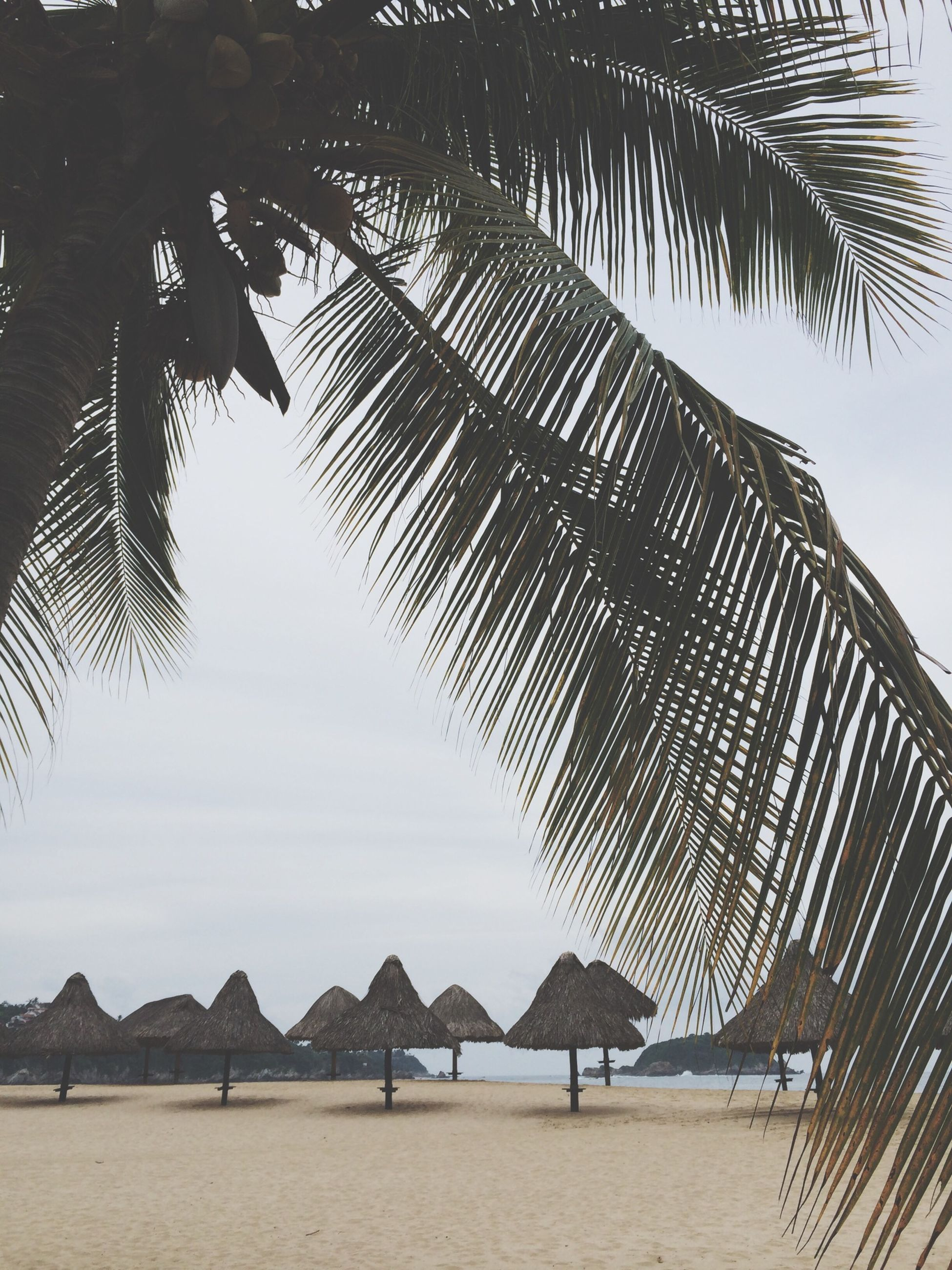 palm tree, beach, tree, sand, sky, sea, tranquility, thatched roof, nature, palm leaf, shore, tranquil scene, coconut palm tree, sunlight, day, scenics, built structure, growth, beauty in nature, beach umbrella