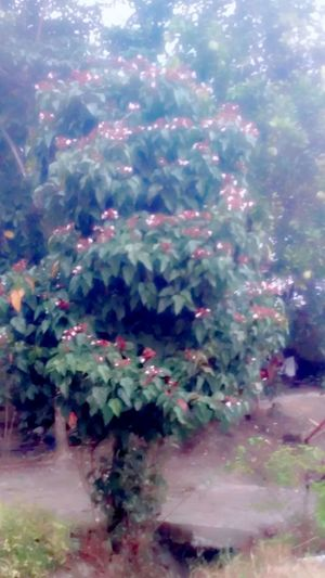 A flowering