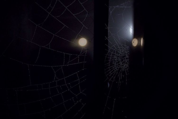 """""""Let be inspired by the lights"""" Pt. 2 Spider Web No People Spider Night Close-up Nature Outdoors Fear Streetphotography"""
