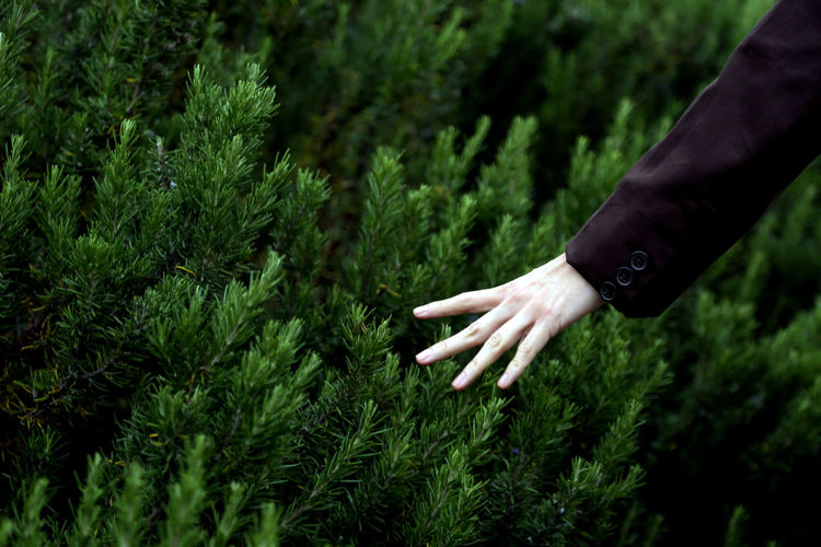 Midsection of person hand on plants