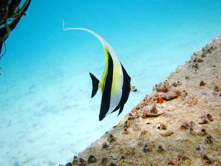 No friends, no food, no wifi. What's a fish to do? 🐠 Sea Nature Water Beauty In Nature No People Underwater Outdoors Animals In The Wild Animal Themes Day Sea Life UnderSea Fish Tropical One One Fish Single Tranquility Fresh Open My Year My View Done That.