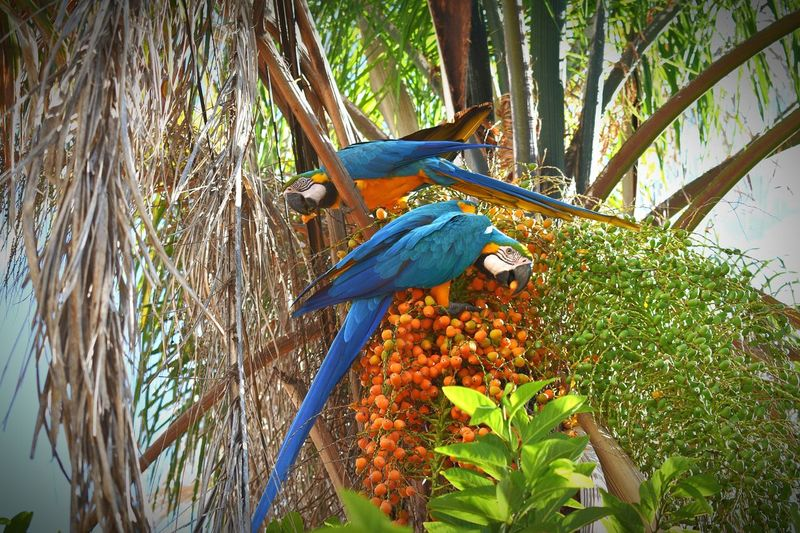 Araraazul One Animal Animal Themes Animals In The Wild Animal Wildlife Bird Parrot Blue