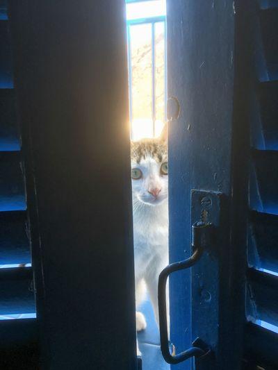 Portrait of cat seen through open door