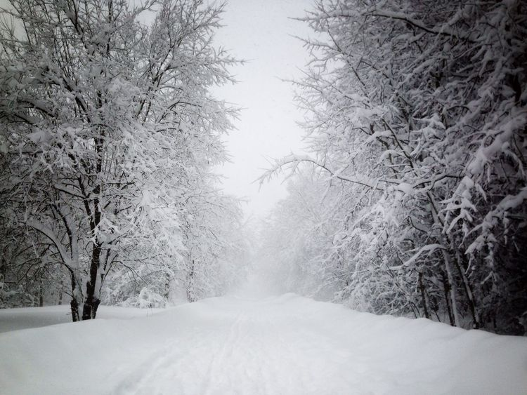 Cold way Winter Road Snowing Outdoors No People Forest Tranquility Landscape Frozen Scenics The Way Forward Tranquil Scene EyeEmNewHere