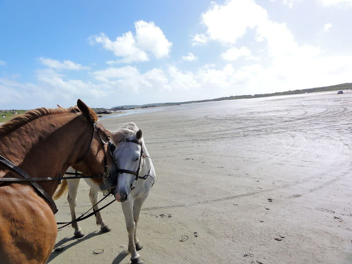 Animals Beutiful Day Enjoying Life Friendship Between Horses Horses Ireland Love Between Horses Riding Horses Riding On The Beach Sand Beach The Tourist ʀᴇɪsᴇɴ