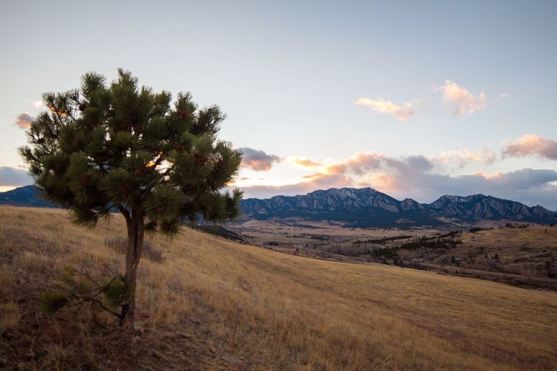 View of the Rocky Mountains Nature Scenics Landscape Beauty In Nature Mountain Tranquil Scene Outdoors Sky Tranquility No People Mountain Range Tree Non-urban Scene Cloud - Sky Idyllic Day Growth Colorado Photography Sunset