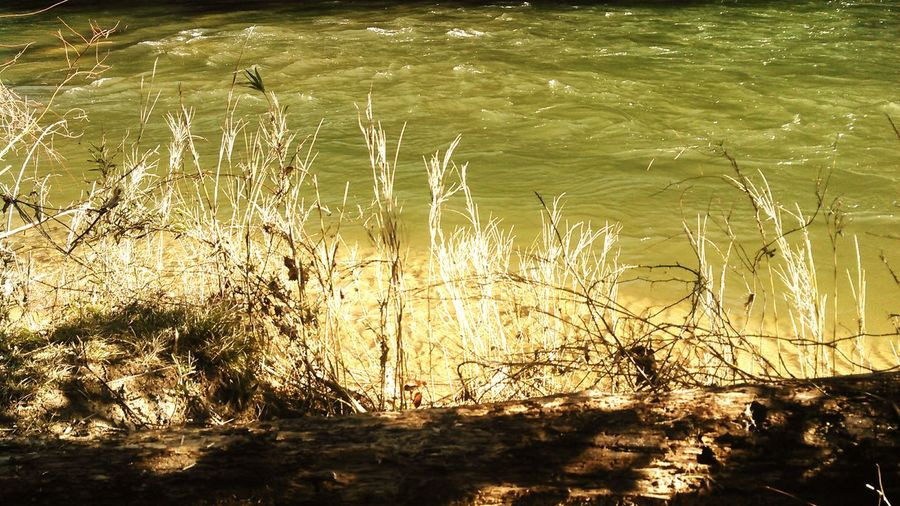 Nice grass Hanging Out Taking Photos Check This Out Enjoying Life Explore Wma Backroad Summer Spot