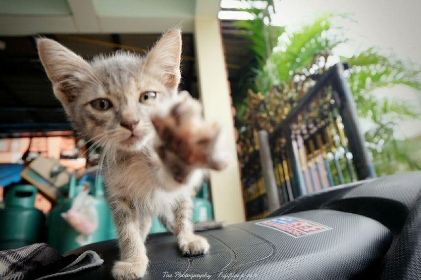 ข อ จั บ ห น่ อ ย Relaxing Taking Photos Enjoying Life Cat EyeEm Thailand Fujifilm X-m1 EyeEm Best Shots Animal Freedom Cute♡