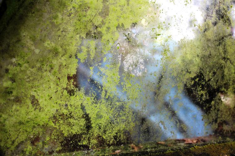 Green Color Day Mouss Mousse Nopeople Transparence Verdatre Vitre épave