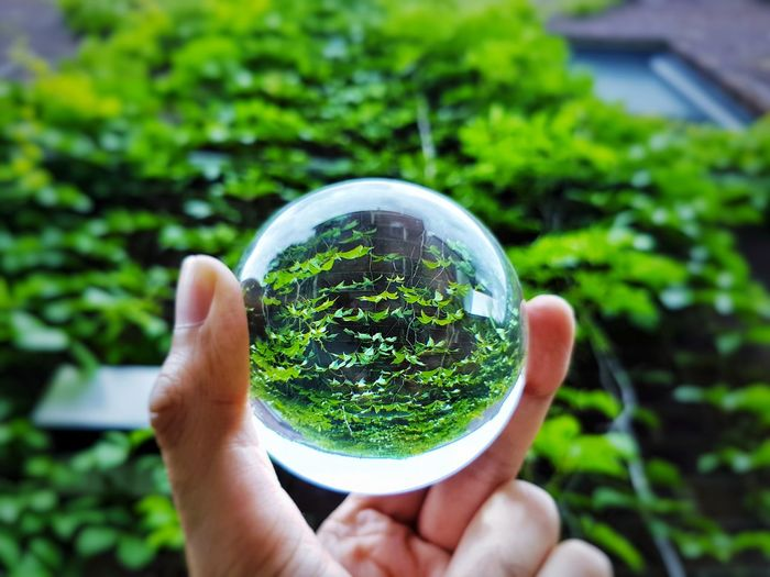 Cropped image of person holding crystal ball against plants