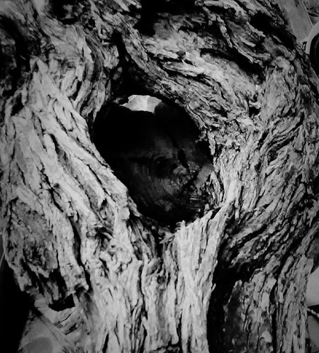 Faces In ThingsHole In The Tree Hole In A Tree Knotted Wood Tree Trunk Close-up Hole