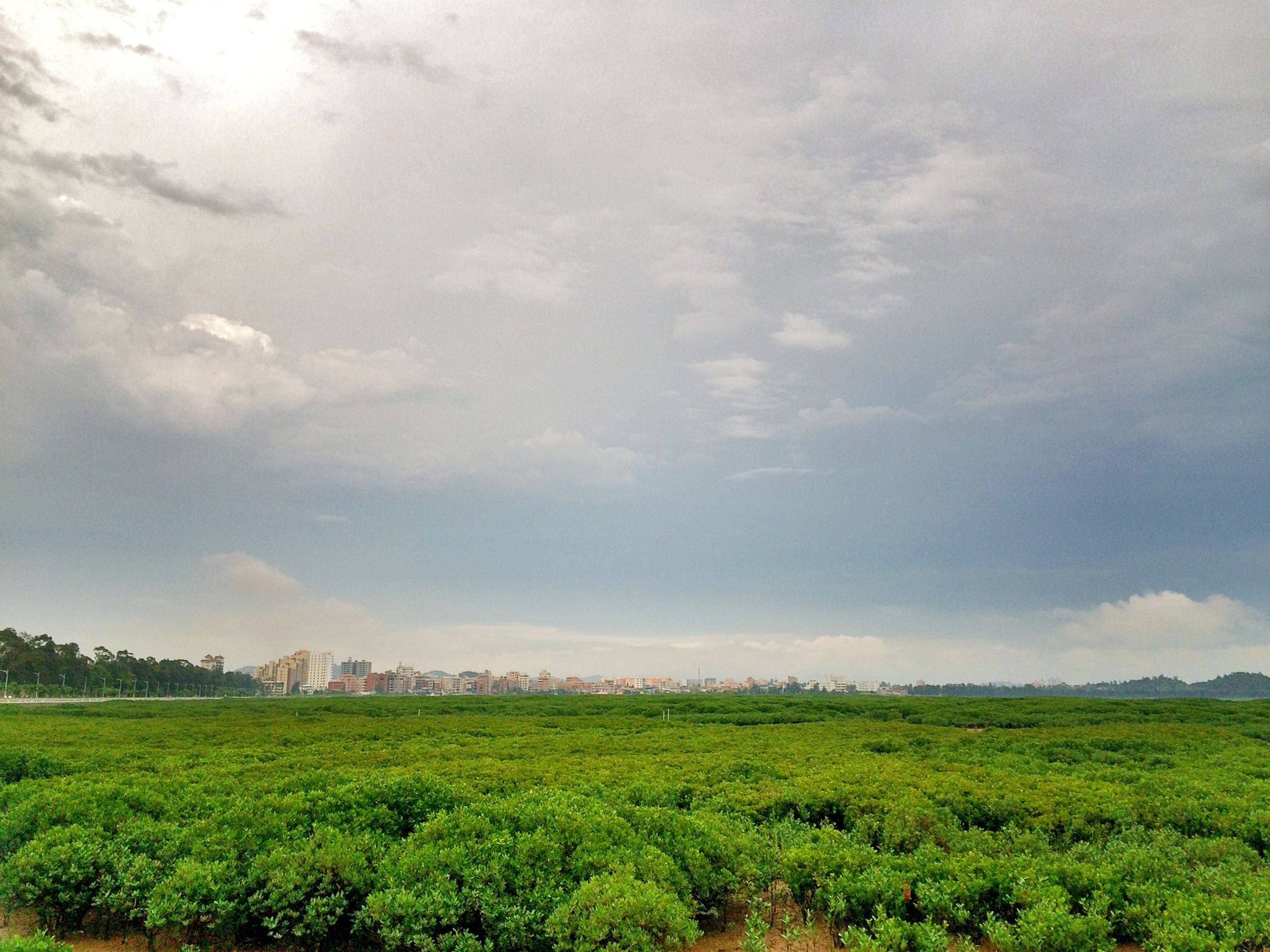 sky, green color, grass, tranquil scene, field, landscape, tranquility, scenics, beauty in nature, cloud - sky, nature, growth, cloudy, cloud, tree, grassy, green, idyllic, rural scene, day