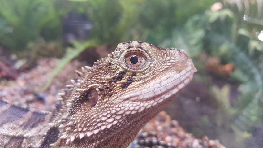 One Animal Animal Wildlife Animal Themes Reptile Close-up Lizard Nature