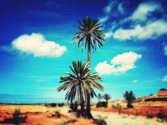 Taking Photos Check This Out Hello World Keep Calm And Shoot A Foto 📷 Tiznit EyeEm Best Shots Bleu Wave Palmiers 🌴👣