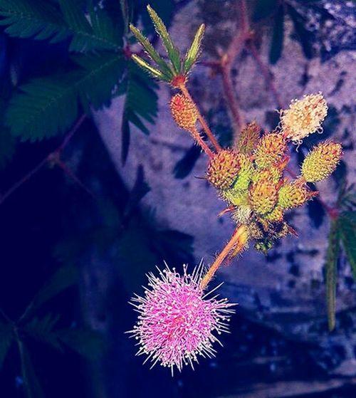 Nature On Your Doorstep The Environmentalist – 2014 EyeEm Awards Capturing Freedom