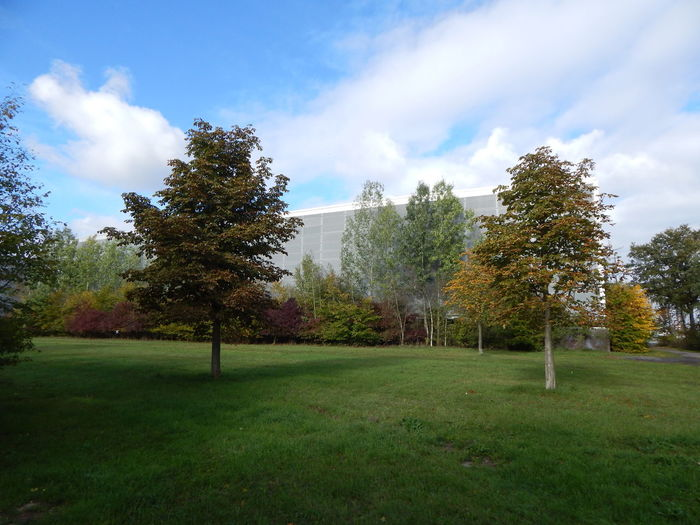 Autumn Baum Bunt Bäume Herbst