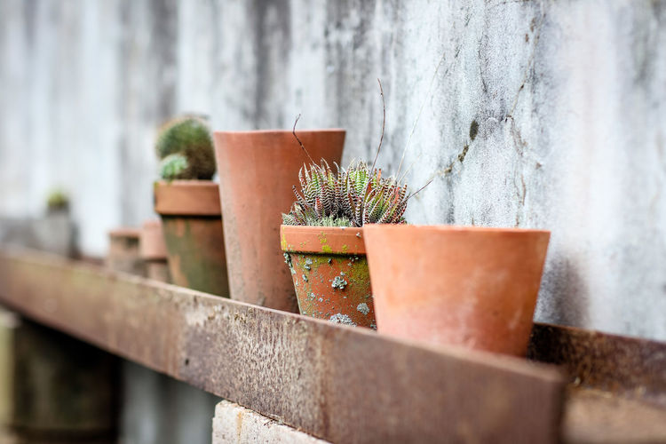 Plant pots Potted Plant Plant No People Growth Day Outdoors Nature Succulent Plant Cactus Flower Pot Concrete Houseplant Steel Focus On Foreground