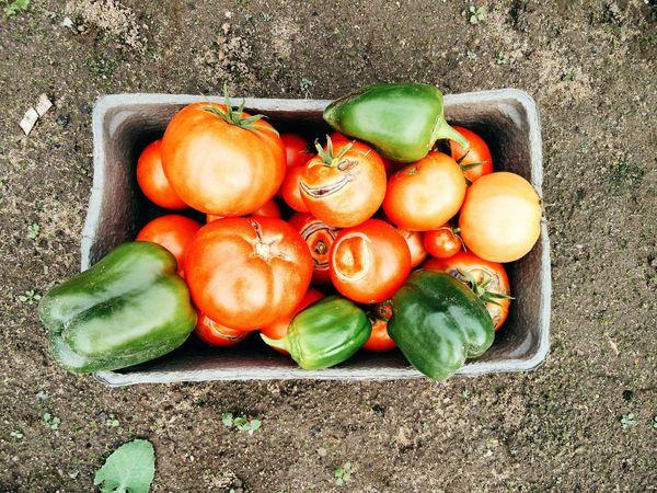 Vegetables Gardening Garden Grandma's Garden Tomatoes Nature