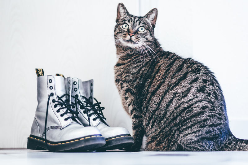 Animal Themes Cat With Shoes Catlover Cats Der Gestiefelte Kater Doc Martens Doc Martens Boots Domestic Animals Domestic Cat Dr Martens Dr Martens Boots No People Pet Portraits Pets Shoelovers Shoes Shoes And Cat Shoes With A Cat Shoeshop Shoeshopping Shoestore Silver Dr Martens Silver Shoes Sitting Tabby Cat