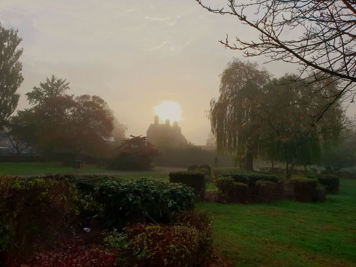 Park Misty Misty Morning Victorian Swindon Tree Rural Scene Agriculture Field Sky Grass Landscape Growing Autumn Mood