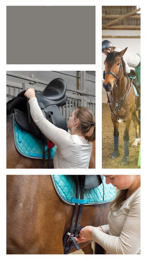 Climb Up Collage Copyspace Full Length Hanoverians Helmet Hobby Horse Indoors  Lap Strap Leisure Activity Lessons Ride Rider's Clothes Rider's Court Rider's Hall Saddel Up Saddle Sport Three Pictures Women Young Pet Portraits