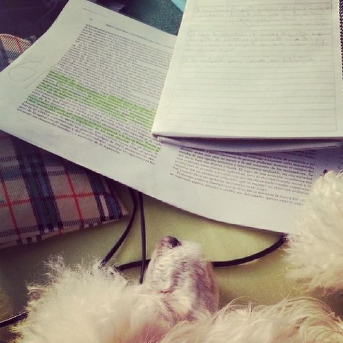 Estudiando historia con Dina jaja History Dina Instamoment