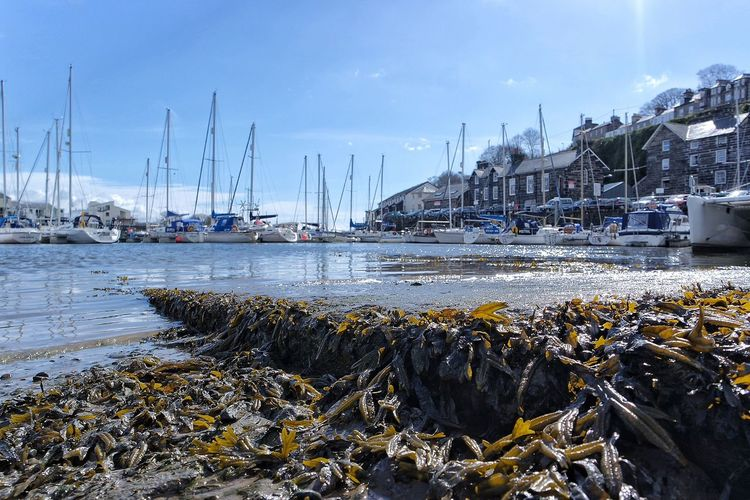 Porthmadog Harbour Porthmadog Harbour Seaweed North Wales Wales Yachts Boats Photography Sunny Day Sunshine Sea Water Blue Sky