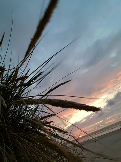 Sunset Sky Cloud - Sky Outdoors Nature Thank You For Your Like Feel Free To Follow ☺