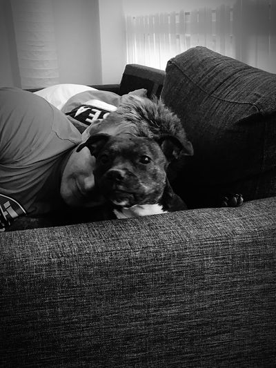 Peek-a-boo 💜😉🐶 Lookatthatface Mydogiscoolerthanyourkids Staffordshire Bull Terrier Can't Live Without Ilovemydog Staffylove Cute Pets Lovemydog Mylittleprincess Socute💕