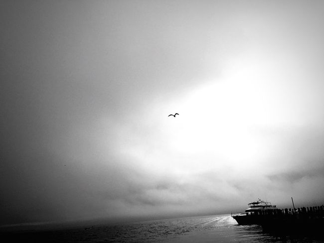 Birds Bird Boats Seaside Sea And Sky Seascape Sea View Bird Photography Birdwatching