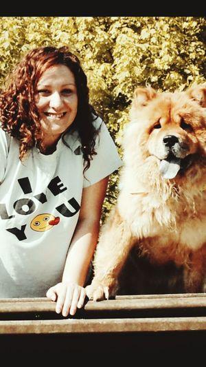 ChowChow Chowchowlovers Chowchowmix🐶 Chowchowofinstagram Chowchowlove Dog Love Dogslife Dog❤ Dogstagram Doglovers