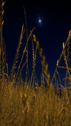 nottata estremamente serena! On The Road Born To Be Wild Nightshot Goodnight Moon no effect