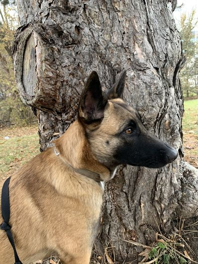 Close-up of a dog sitting on tree trunk