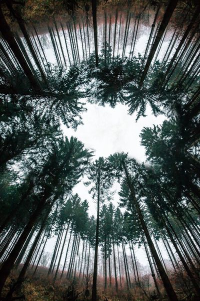 Ich glaub ich steh' im Wald Bäume Tree_collection  Naturelovers EyeEm Nature Lover Nature Photography Nature