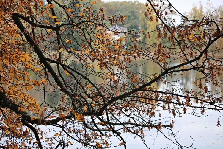 Tree Branch Beauty In Nature Nature Autumn Tranquility Change Focus On Foreground Low Angle View Scenics - Nature Tranquil Scene Lake Water Idyllic Calmness Nature_collection Nature Photography Naturelovers Beautiful Nature Autumn Collection Relaxing Moments Relaxing Time