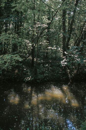 River Canon