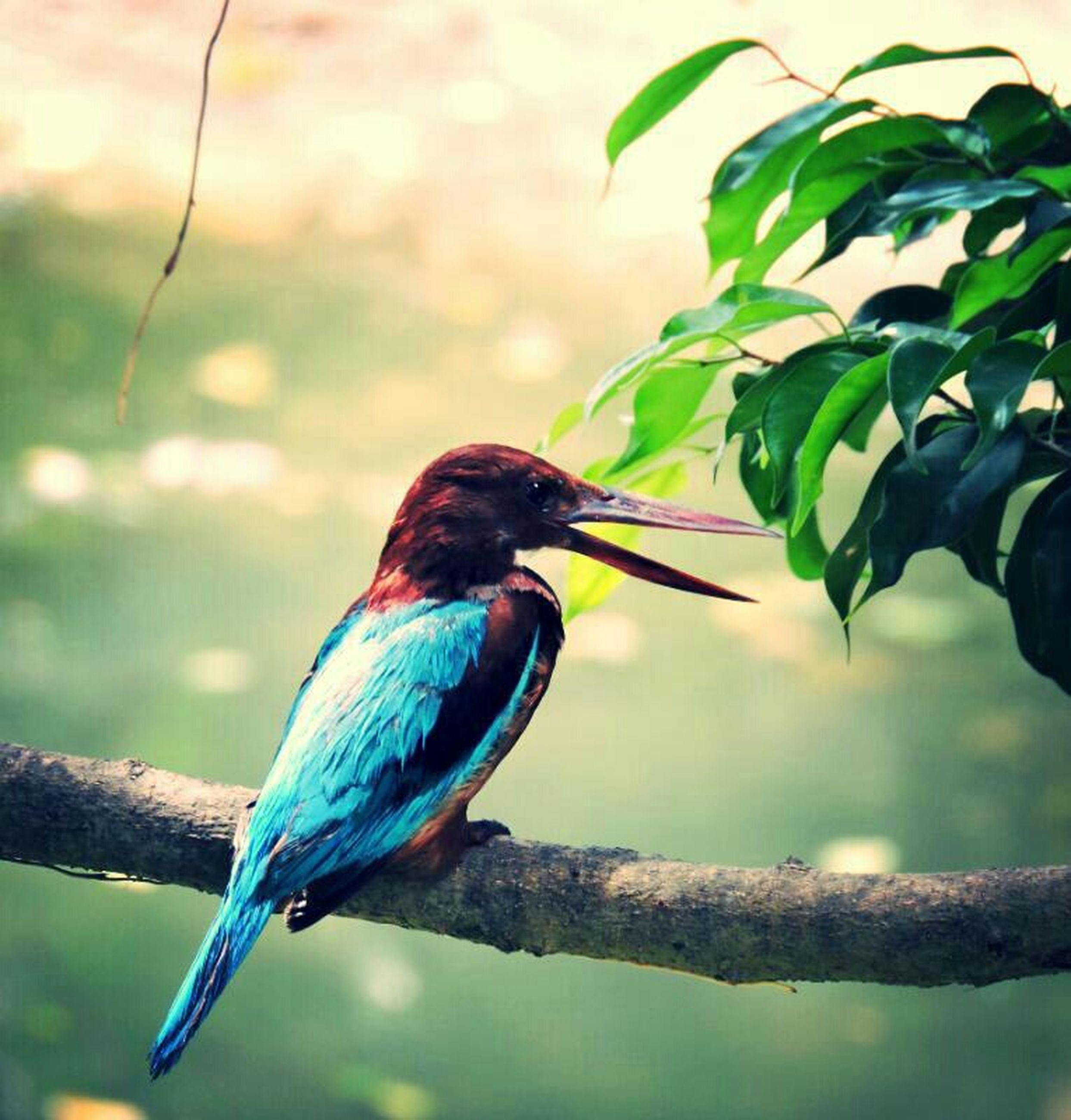 bird, one animal, animal themes, animals in the wild, wildlife, focus on foreground, perching, blue, branch, nature, close-up, beauty in nature, tree, outdoors, day, full length, beak, selective focus, side view, no people