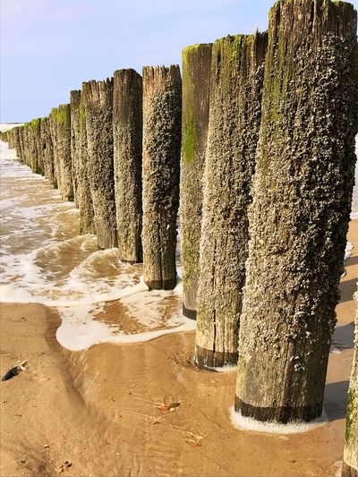 Nature Sunny Day Shadows & Lights Sea Wood Pole Low Angle View Wooden Texture Wooden Structure Wooden Post Sand Outdoors Day No People Sky Beach Scenics Beauty In Nature Clear Sky