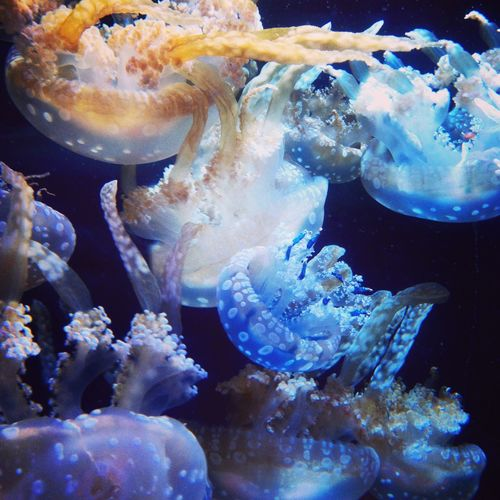 Aquarium クラゲ Jellyfish Neon Life