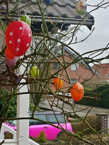 Easter bunny parked its car in front of our house 😉.... Easter Is Coming Soon Easter Is Approaching Colourful Decoration Seasonal Decorations Outdoor Decorations Easter Decoration Easter Egg Easter Easter Eggs Ladyphotographerofthemonth Leafless Rose Bush Easter Ready Here Belongs To Me