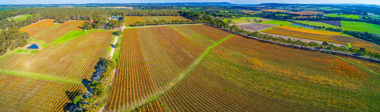 Beautiful vineyard in autumn in Melbourne, Australia - wide aerial panorama High Up Horizon In A Row Landscape Meadow No People Panoramic Red Hill Rural Scene Sky Sunlight Travel Locations Tuerong Vineyard Yabby Lake Aerial Agriculture Australia Autumn Background Beautiful Beauty Country Drone  Fall Field Grapes Grass Green Growing Melbourne Mornington Nature Outdoors Panorama Peninsula Scenic Shīrāz Tourism Travel Travel Destinations Tree Victoria View Vines Viticulture Wine Winery