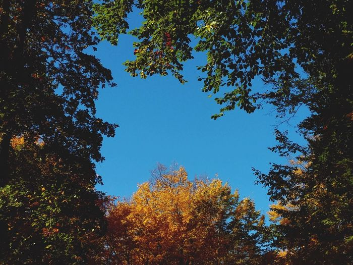 Autumn Autumn colors Autumn🍁🍁🍁 Sunny Day Sunnyday☀️ Autumn Collection Authentic Moments Tree Tree Area Branch Forest Astronomy Blue Leaf Pinaceae Sky