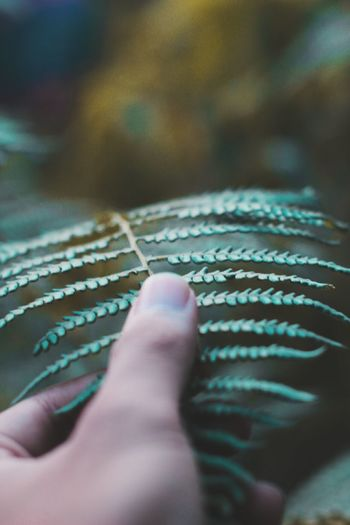 Close-up of person touching fern leaves