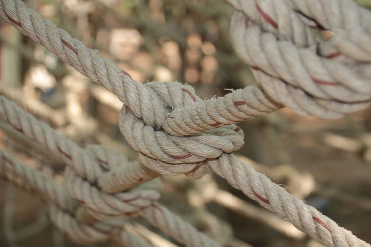 Close-up of rope tied to wood