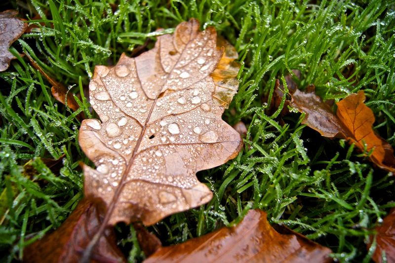 Close-up of wet dry leaves on field