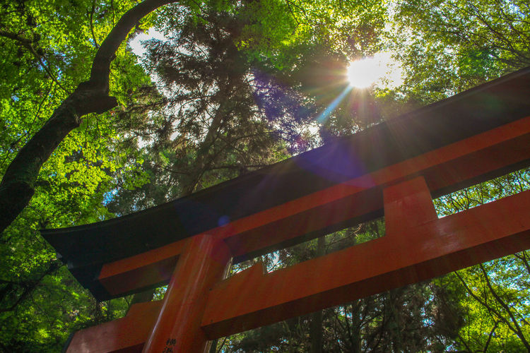 Architecture Backgrounds Beauty In Nature Built Structure Exploring EyeEm Best Shots Green Japan Japanese  Kyoto Landscape Lens Flare Low Angle View Nature Outdoors Photography Summer Sun Sunbeam Tradition Travel Tree